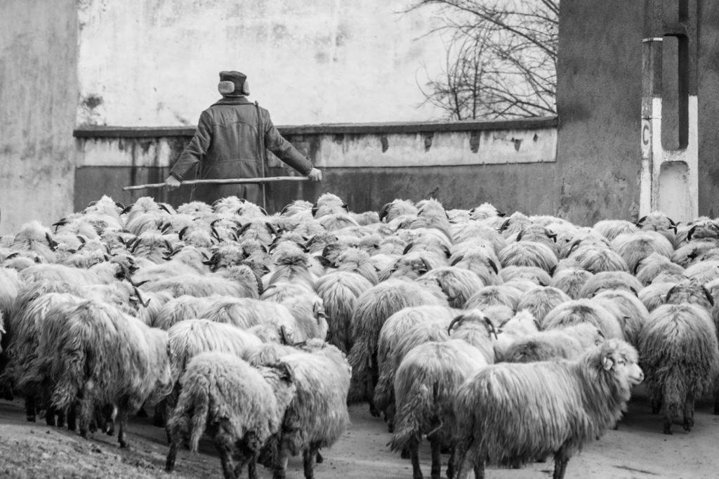 Shepherd in Transylvania