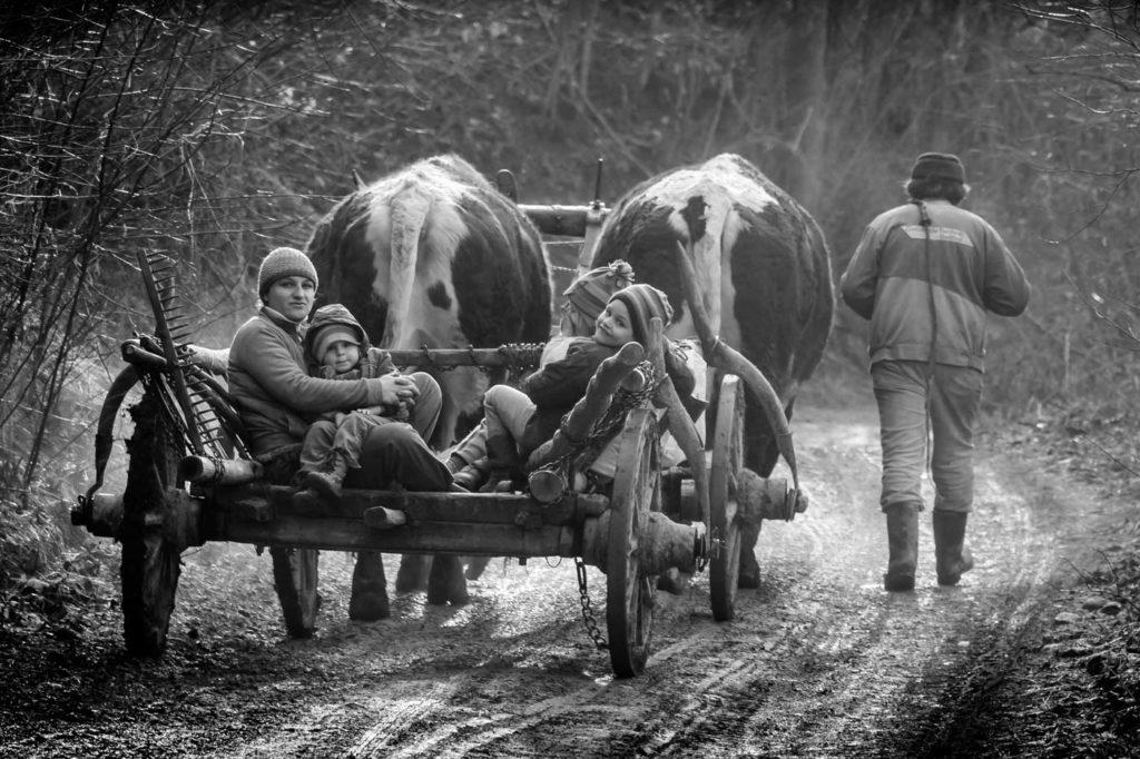 The Farmers, Transylvania