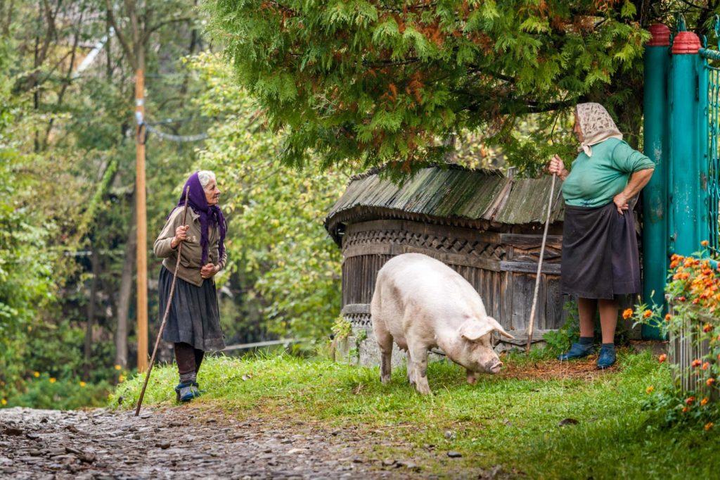Rural Life, Maramures