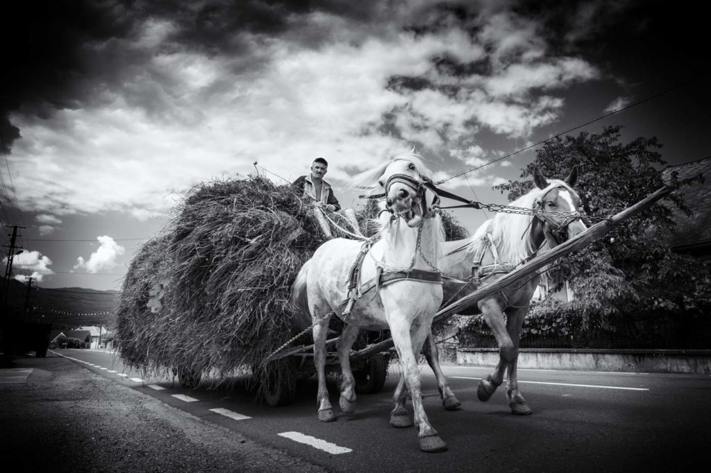 Horses and carts, Maramures